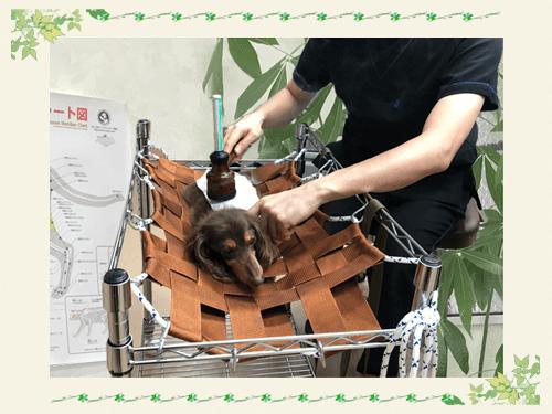 当院の消化器疾患の治療の特徴|厚木キジュ動物病院