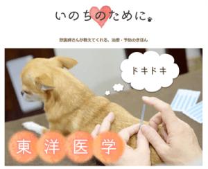 獣医さんが教えてくれる、治療・予防のきほん|厚木キジュ動物病院