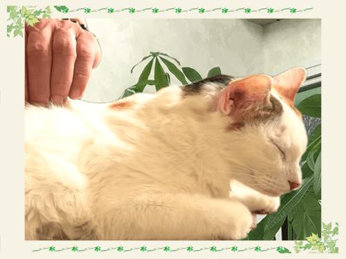 シニア・未病ケア|厚木キジュ動物病院