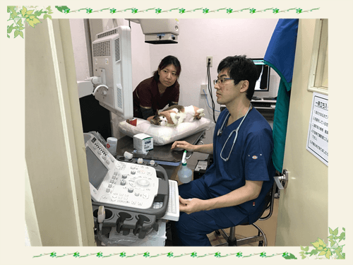 循環器診療|厚木キジュ動物病院