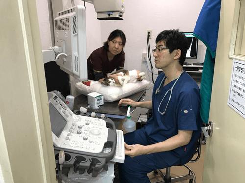 検査|厚木キジュ動物病院