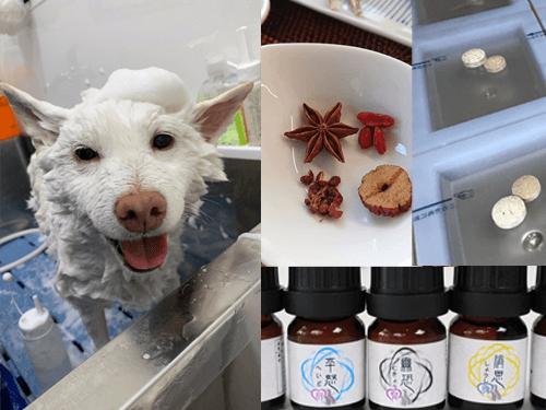 治療の提案|厚木キジュ動物病院